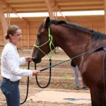 LIGHT  HANDS EQUITATION